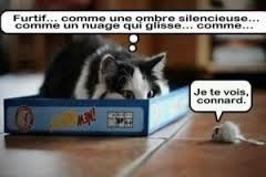 blagues chat
