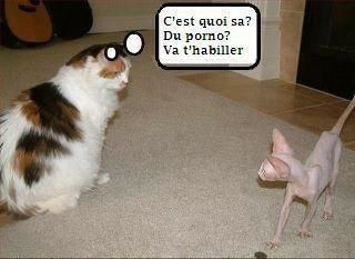 blagues d'animaux