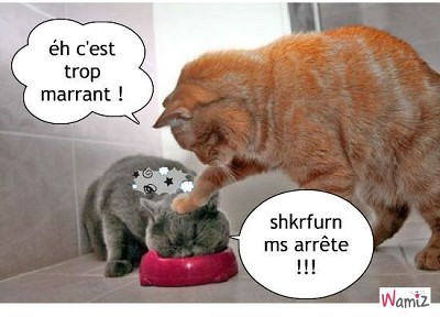 Blagues d 39 animaux - Chaton marrant ...