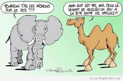 blagues elephant