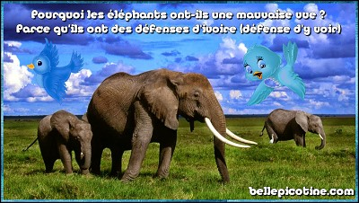 blagues elephants