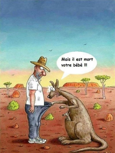 blagues kangourou