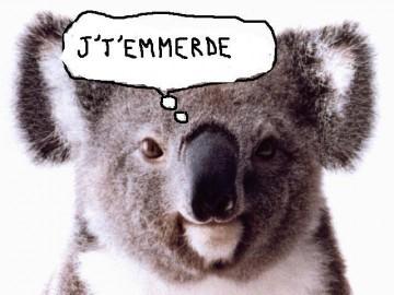blagues koala