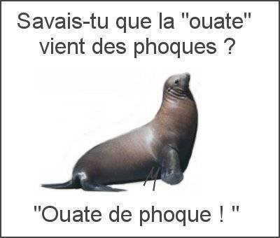blagues quebecois