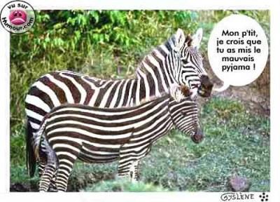 blagues zebre
